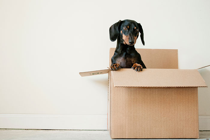 dog in packing box